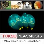 Toksoplasmosis pada Hewan dan Manusia